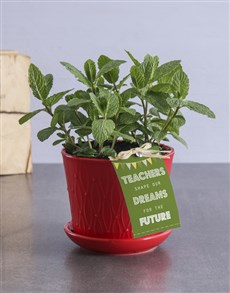 plants: Teachers Day Mint in a Pot!