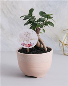 plants: Bonsai Tree in Speckled Pot!