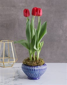 flowers: Radiantly Red Tulips In A Blue Pot!
