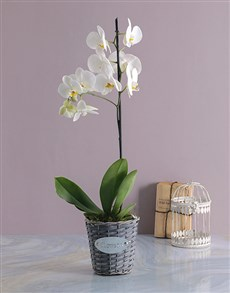 flowers: Orchid in Grey Flower Basket!