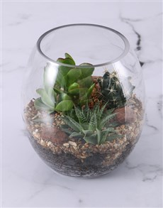 flowers: Large Succulent Fish Bowl Terrarium!