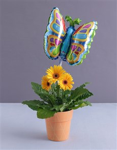 gifts: Butterfly Gerbera Plant!