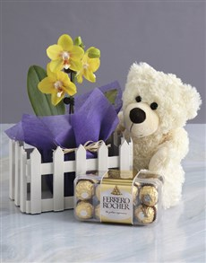 flowers: Midi Orchid Picket Fence Bundle!