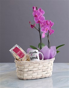 plants: Phalaenopsis Orchid Gift Basket!