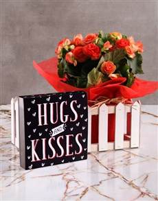 plants: Hugs and Kisses Begonia Plant with Chocs!