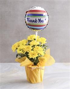 plants: Yellow Chrysanthemum Blossoms!