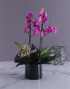plants: Personalised Fabulous Birthday Orchids!