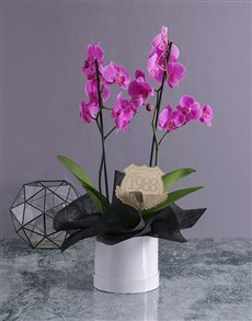 plants: Personalised Date Orchid in a Hatbox!