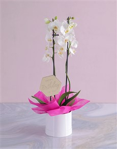 plants: Happy Birthday Orchid in a Hatbox!