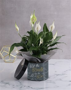 plants: Golden Beauty Lily Plant In Hatbox!