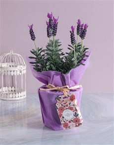 gifts: Lavender and Rose Cream Treat!