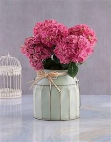 flowers: Pink Blossoms Hydrangea!