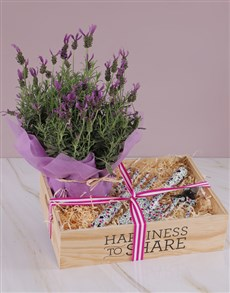plants: Gardening Kit Lavender Combo!