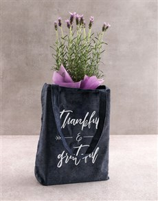 flowers: Radiant Lavender Delights!