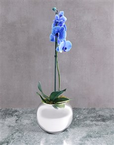 flowers: Rare Blue Phalaenopsis Orchid In Round Silver Vase!