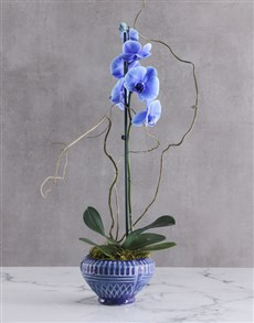 flowers: Rare Blue Orchid In Cobalt Blue Bowl!