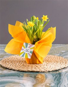 plants: Yellow Daffodil Plants In Yellow Wrapping!