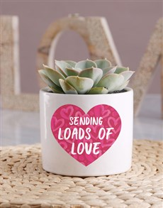 plants: Loads of Love Potted Succulent!