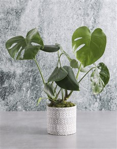 plants: Lush Monster Leaf!
