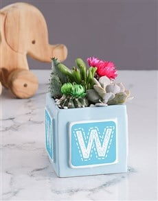 plants: Personalised Pink Baby Box with Cacti !
