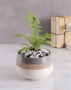 flowers: Fern in Ceramic Pot!