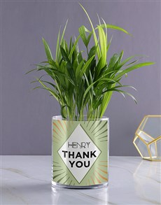 gifts: Personalised Areca Palm!