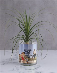 flowers: Personalised Ponytail Palm in Vase!