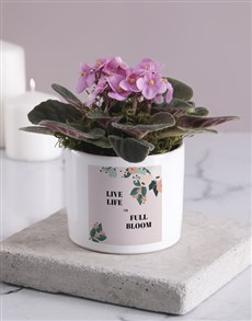 plants: Life In Full Bloom African Violet!