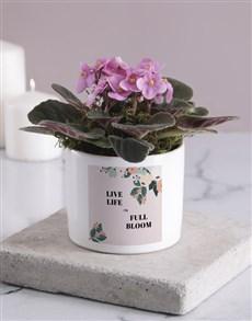 plants: Life In Full Bloom African Violet!