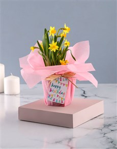 flowers: Happy Birthday Yellow Daffodils In Pink Wrapping!
