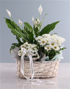 flowers: Spathiphyllum Variety Basket!