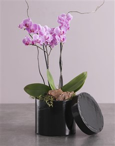 plants: Pink Orchid In A Hatbox!