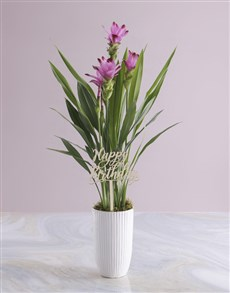 plants: Purple Curcuma in Tall Ceramic Vase!