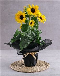 flowers: Sunshine in a Pot!