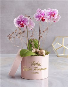 plants: Outstanding Orchids In Hat Box!