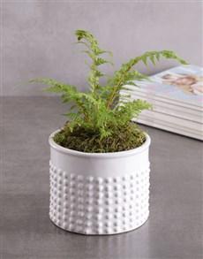 plants: Fern Plant in Textured White Vase!