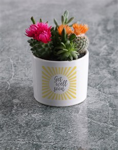 flowers: Cacti Pot of Wellness!