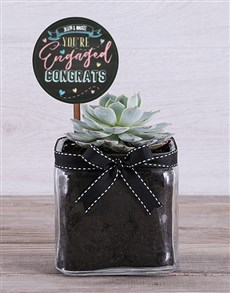 flowers: Personalised Congrats On Engagement Succulent!