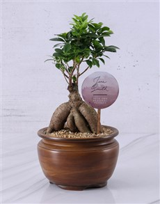 flowers: Personalised Ficus Bonsai Gift!