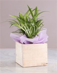 flowers: Personalised Sweet Home Bamboo!