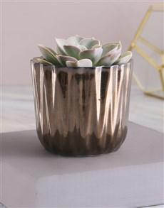 flowers: Single Succulent In Bronze Pot!