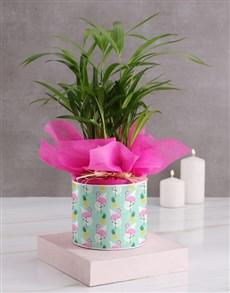 flowers: Areca Bamboo in Flamingo Hatbox!
