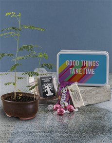 plants: Good Things Baobab Tree with Confectionery!