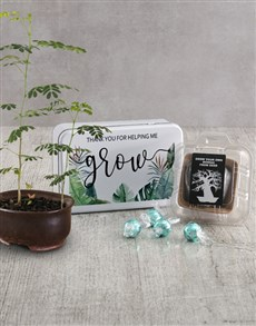 plants: Grow Baobab Tree Assortments!