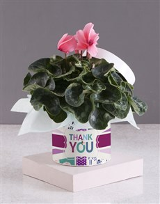 flowers: Cerise Cyclamen with Love!