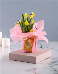 plants: Yay Daffodil Plant!