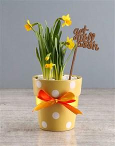plants: Get Well Daffodil Plant!