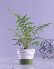 plants: Fern Plant in White and Olive Pot!
