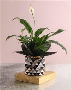 flowers: Elegant Spathiphyllum Plant!
