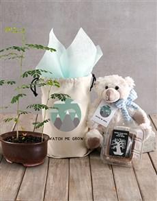 flowers: Watch Me Grow Baobab Tree with Boy Teddy Plush!